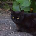 Photos: 黒猫 1