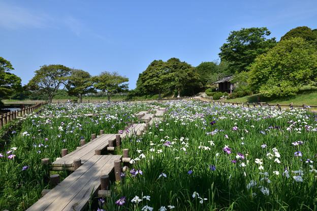 江戸菖蒲苑