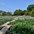 Photos: 江戸菖蒲苑