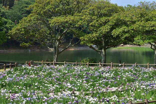 菖蒲苑と禊池