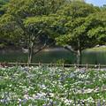 Photos: 菖蒲苑と禊池