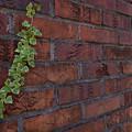Photos: 煉瓦の壁