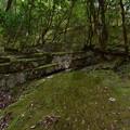 Photos: 苔むした岩壁