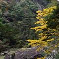 Photos: 蓬莱岩
