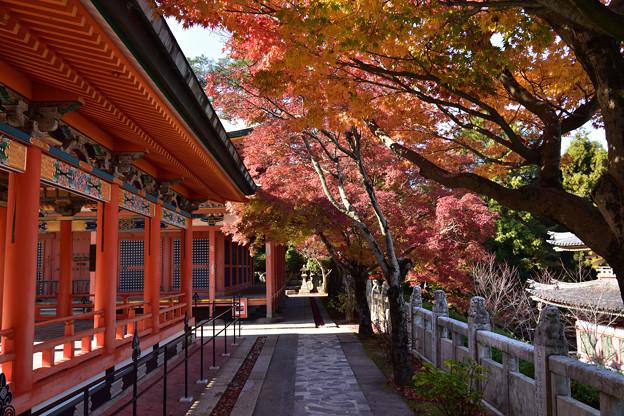 回廊脇の紅葉
