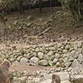 Photos: 猿か岩か