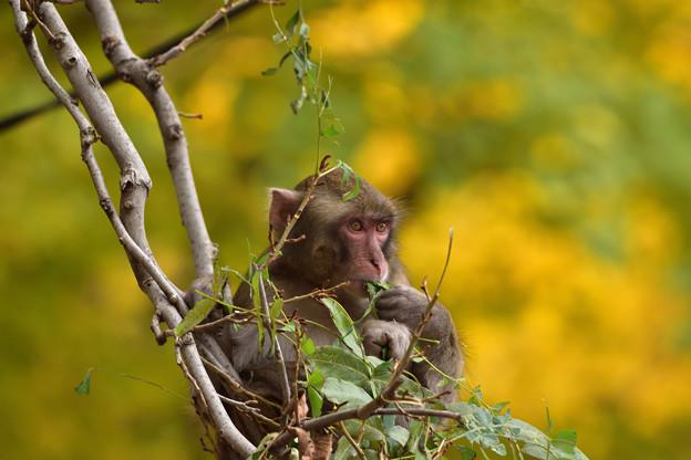 木の上で食事中