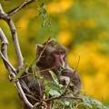 Photos: 木の上で食事中