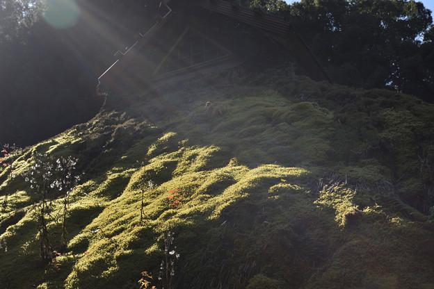 Photos: 茅葺の苔