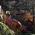 Photos: 森の中の遊具