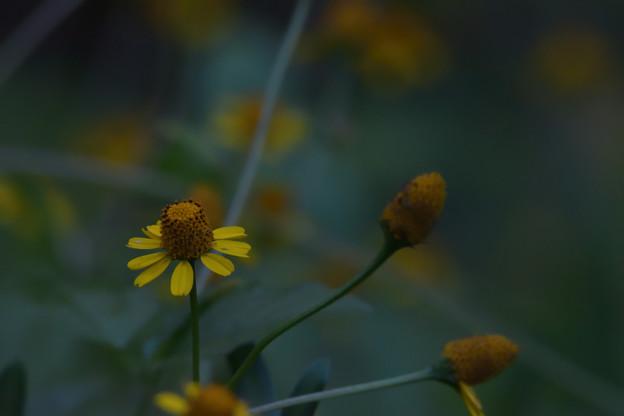 Photos: ヌマツルギク