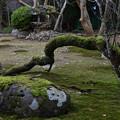 Photos: 倒木の苔