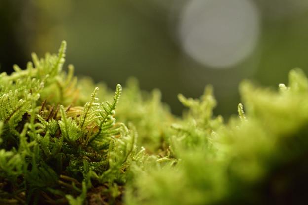 石灯篭の苔