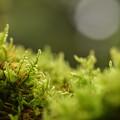 Photos: 石灯篭の苔