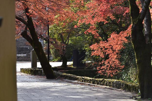 壇具川の紅葉