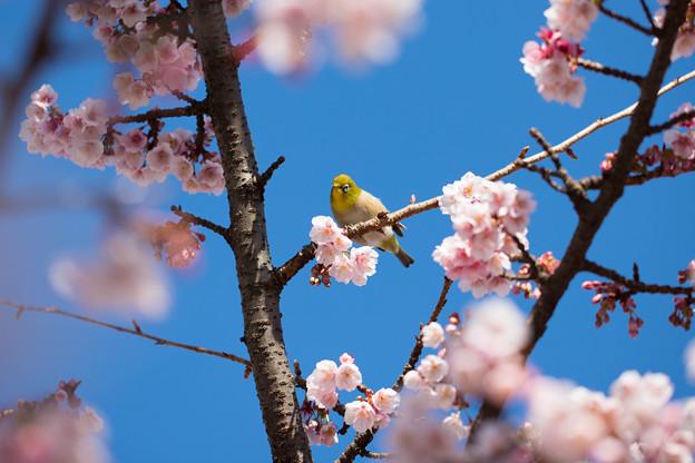 一足早い春