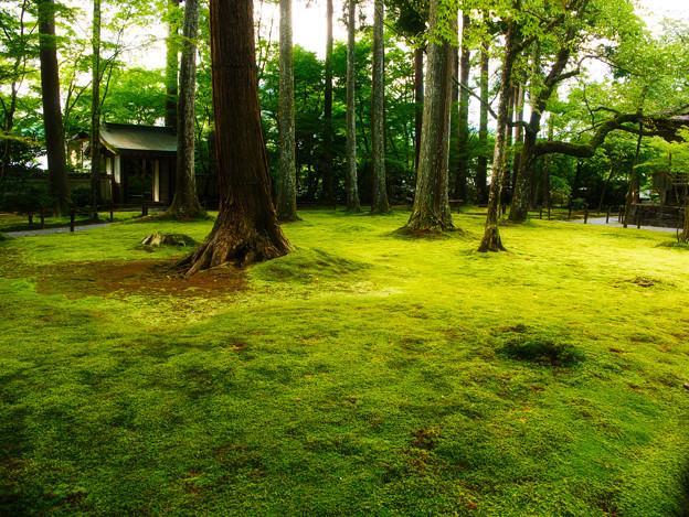 初秋の苔園_1
