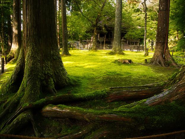 初秋の苔園_2