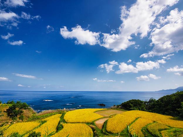 海を眺めて棚田