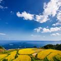 Photos: 海を眺めて棚田