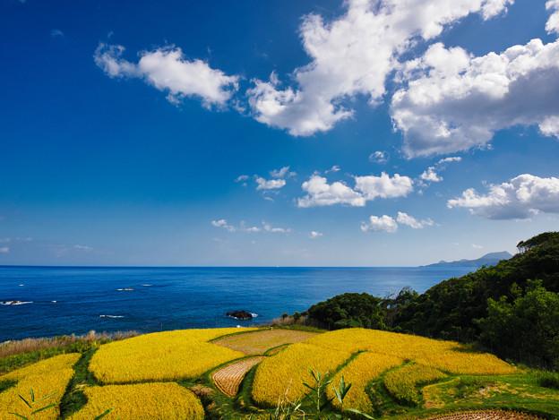 Photos: 海を眺めて棚田_2