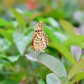 写真: 蝶?