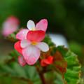 Photos: 公園の花