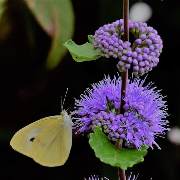 写真: 花と蝶2