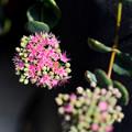 写真: 我が家の花