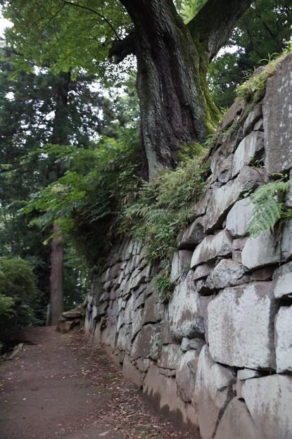 沼田公園 石垣