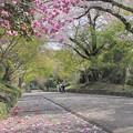 鷺森神社・参道2