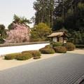 正伝寺方丈庭園5
