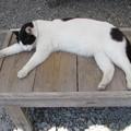 猫のお昼寝 のびのび~