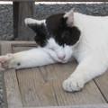 猫のお昼寝 ZZZ・・・