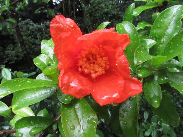 葵の庭・何の花?1