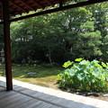 本法寺・巴の庭1