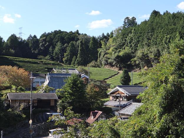写真: 茶畑風景2
