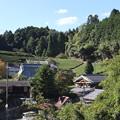 茶畑風景2