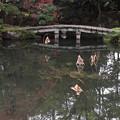 白沙村荘・瑞月池2