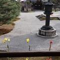 大覚寺・御影堂前庭