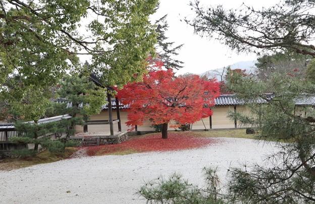 大覚寺・五大堂前庭