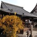 妙顕寺・鬼子母神堂2