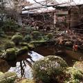 Photos: 三千院・聚碧園(円融房を望む)