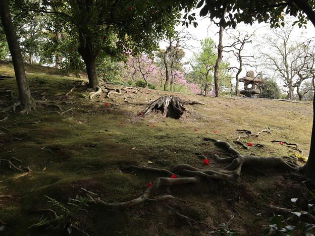 城南宮・春の山3