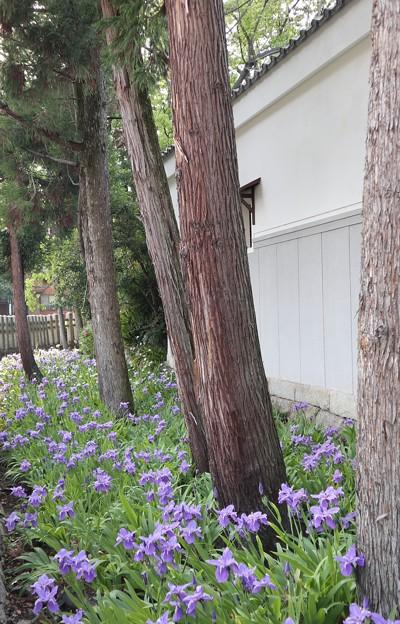 上御霊神社・境内外堀1