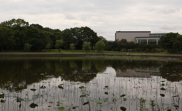 今年の蓮池