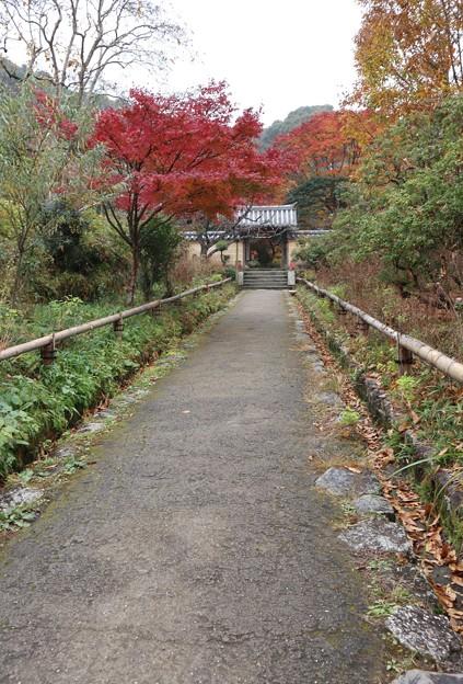 浄瑠璃寺・山門