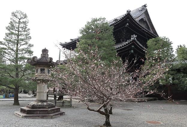Photos: 知恩院・阿弥陀堂