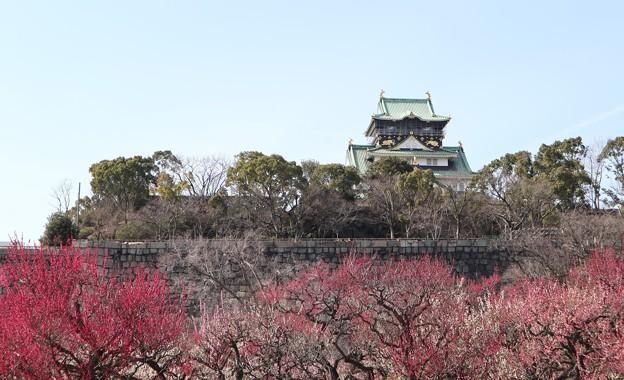 梅と大阪城2