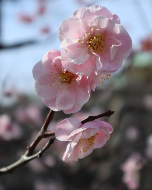 ムサシノ(武蔵野)2